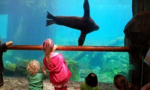 Eden seals zoo