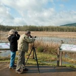 Birdwatching and the freedom of self-forgetfulness